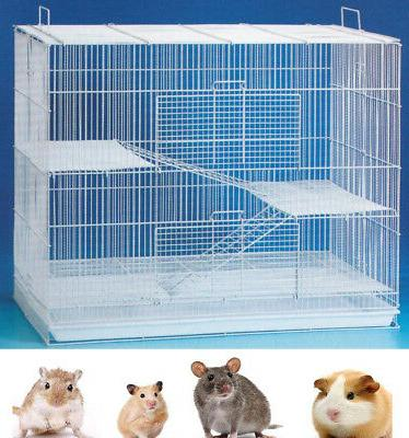 24 chinchilla ferret guinea pig rat mice