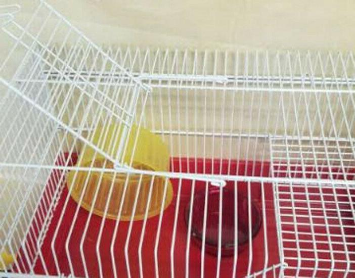 H810 -2 CAGE COMES WITH WHEEL, FOOD DISH TUBE