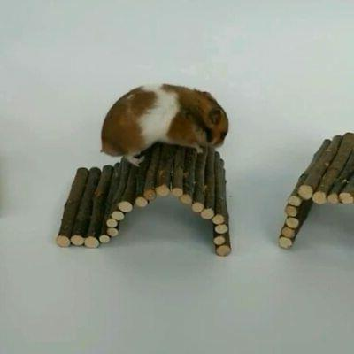 Hamster Wooden Animals Cage Pig