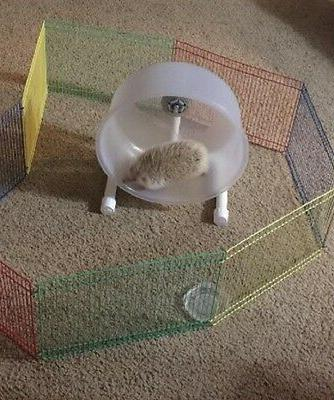 Small Pet Hamster Playpen Cage